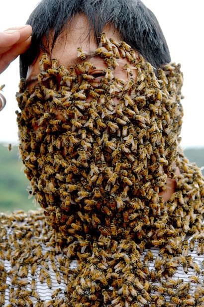 Φωτογραφία της ημέρας: Μέλισσες...