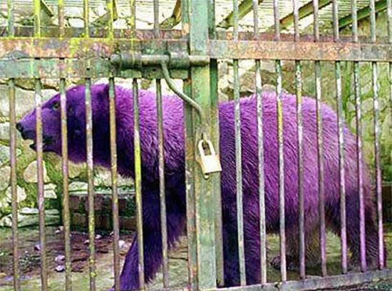 Ζώα με εντελώς ασυνήθιστα χρώματα