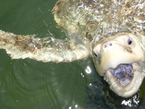 Χελώνες σε έκσταση (10)