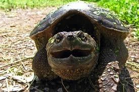Χελώνες σε έκσταση (9)