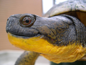 Χελώνες σε έκσταση (7)