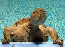 Χελώνες σε έκσταση (5)