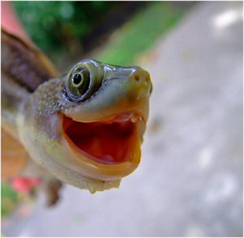 Χελώνες σε έκσταση (4)