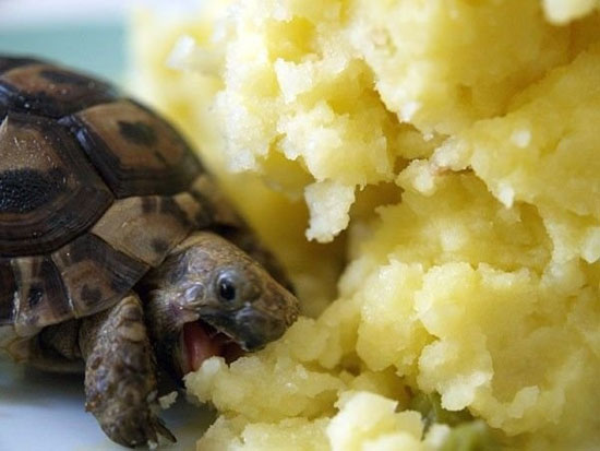 Χελώνες σε έκσταση (3)