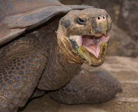 Χελώνες σε έκσταση (2)
