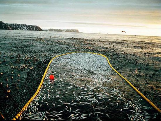 Bering Sea (13)
