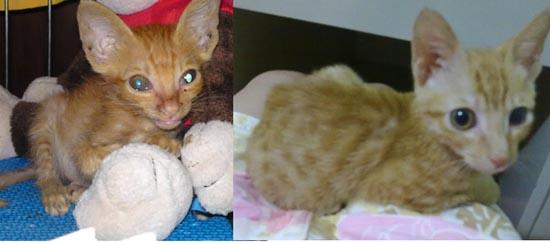 Διάσωση ζώων πριν και μετά (1)