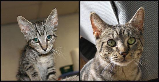 Διάσωση ζώων πριν και μετά (3)