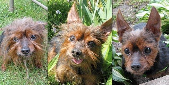 Διάσωση ζώων πριν και μετά (7)