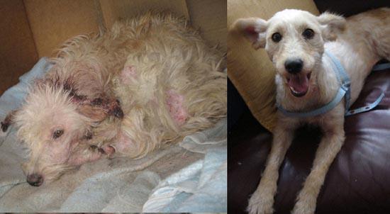 Διάσωση ζώων πριν και μετά (11)