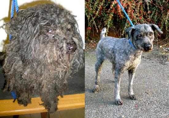 Διάσωση ζώων πριν και μετά (12)