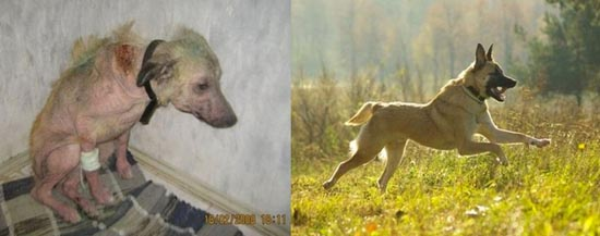 Διάσωση ζώων πριν και μετά (13)