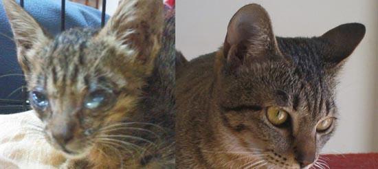 Διάσωση ζώων πριν και μετά (14)