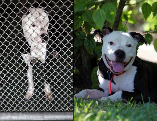 Διάσωση ζώων πριν και μετά (16)