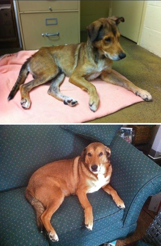 Διάσωση ζώων πριν και μετά (18)