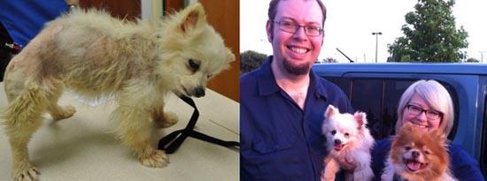 Διάσωση ζώων πριν και μετά (19)