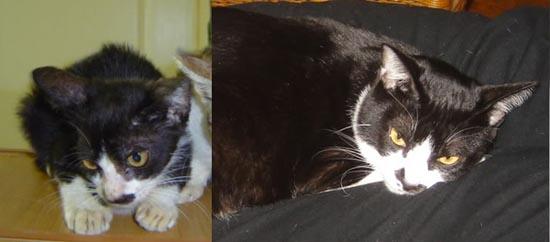 Διάσωση ζώων πριν και μετά (21)