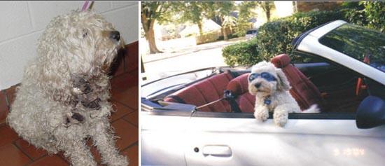 Διάσωση ζώων πριν και μετά (22)