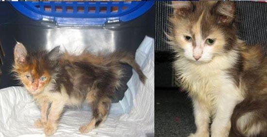 Διάσωση ζώων πριν και μετά (23)