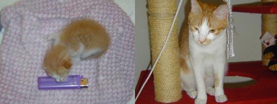 Διάσωση ζώων πριν και μετά (24)