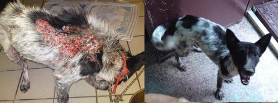 Διάσωση ζώων πριν και μετά (25)