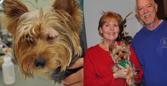 Διάσωση ζώων πριν και μετά (26)