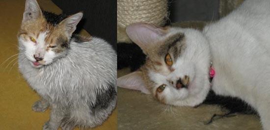 Διάσωση ζώων πριν και μετά (28)