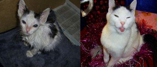 Διάσωση ζώων πριν και μετά (29)