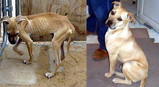 Διάσωση ζώων πριν και μετά (30)