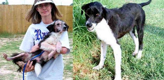 Διάσωση ζώων πριν και μετά (31)