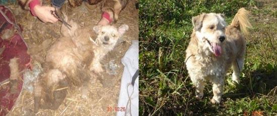 Διάσωση ζώων πριν και μετά (32)