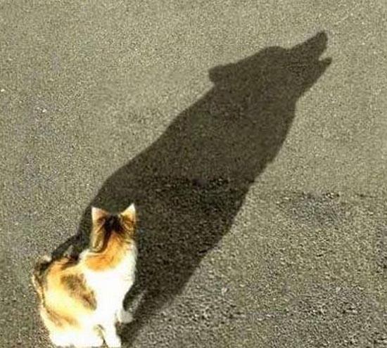 Εντυπωσιακές σκιές (2)