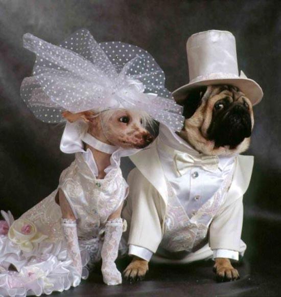 Γάμοι ζώων (1)