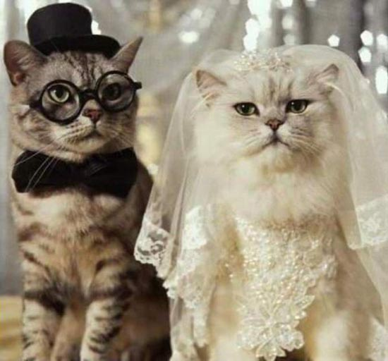 Γάμοι ζώων (2)