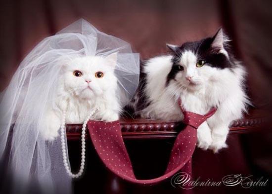 Γάμοι ζώων (3)