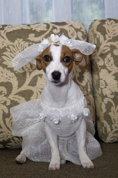Γάμοι ζώων (4)