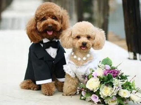 Γάμοι ζώων (5)