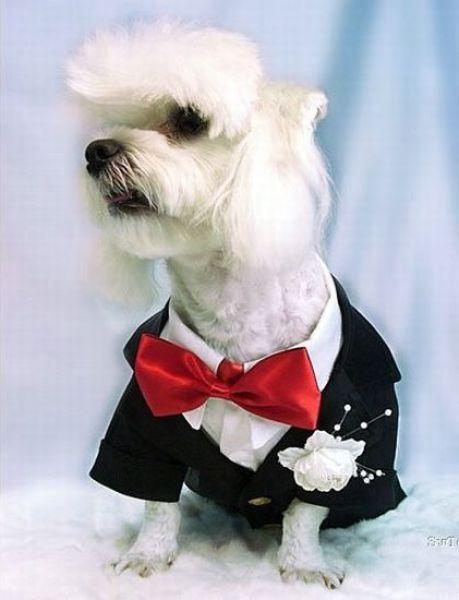 Γάμοι ζώων (6)