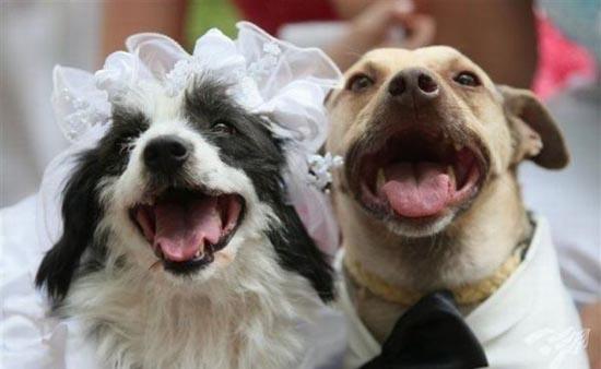 Γάμοι ζώων (7)