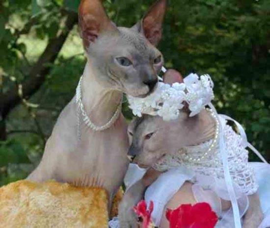 Γάμοι ζώων (8)