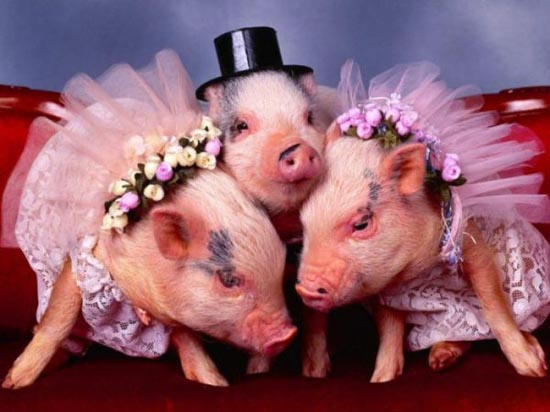 Γάμοι ζώων (9)