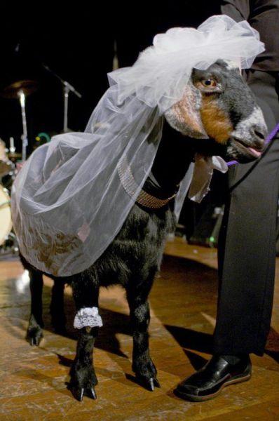 Γάμοι ζώων (10)