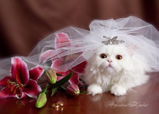 Γάμοι ζώων (11)