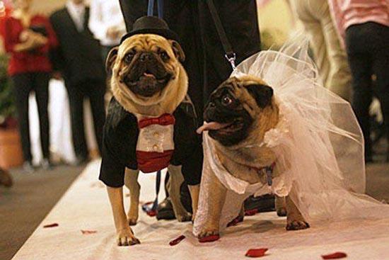 Γάμοι ζώων (13)