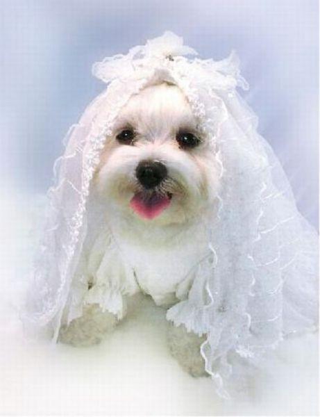 Γάμοι ζώων (14)