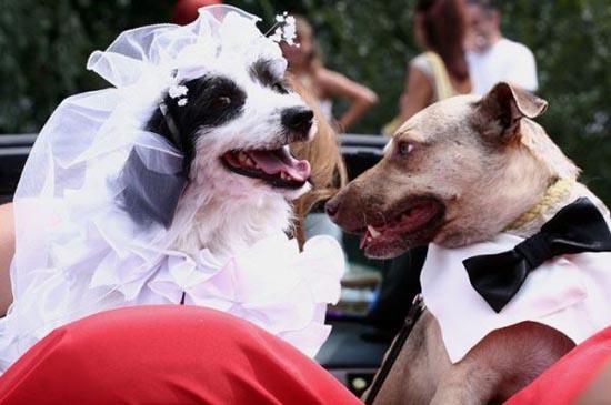 Γάμοι ζώων (15)