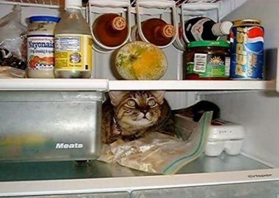 Γάτες στα πιο παράξενα μέρη (2)
