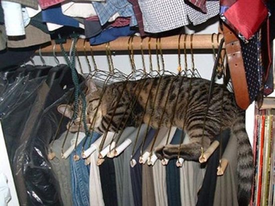Γάτες στα πιο παράξενα μέρη (3)
