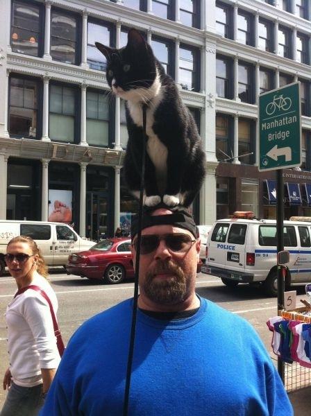 Γάτες στα πιο παράξενα μέρη (4)