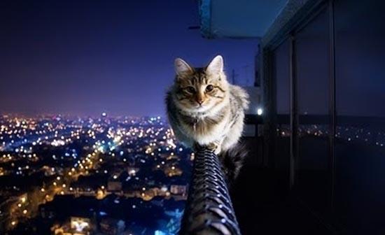 Γάτες στα πιο παράξενα μέρη (5)